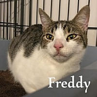 Adopt A Pet :: Freddy - Flint HIll, VA