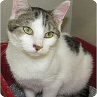 Adopt A Pet :: Shelby (female) - Riverhead, NY