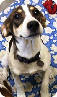 Hound (Unknown Type) Mix Dog for adoption in Kalamazoo, Michigan - Maddie