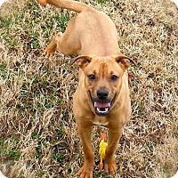 Adopt A Pet :: JoJo - Princeton, KY
