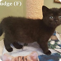 Adopt A Pet :: Pudge - Bentonville, AR