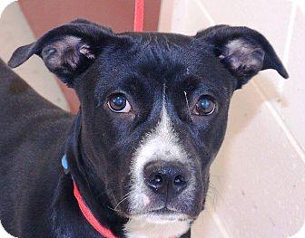 Labrador Retriever Mix Dog for adoption in McDonough, Georgia - Flapjack