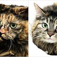 Adopt A Pet :: Tink and Aurora - Wasilla, AK