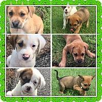Adopt A Pet :: THE FANTASIC 5 - Brattleboro, VT