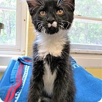 Adopt A Pet :: Owen - Jackson, NJ
