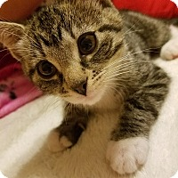 Adopt A Pet :: Cookie Dough - CLEVELAND, OH