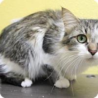 Adopt A Pet :: Krista - Benbrook, TX