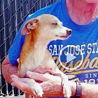 Adopt A Pet :: LEGS - Red Bluff, CA