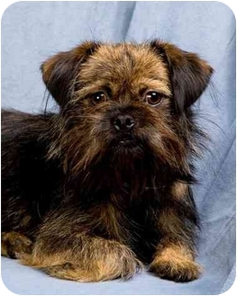 Terrier (Unknown Type, Small) Mix Dog for adoption in Anna, Illinois - WISTERIA