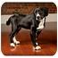 Photo 2 - Labrador Retriever/Cocker Spaniel Mix Dog for adoption in Owensboro, Kentucky - Oscar