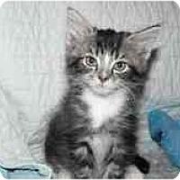Adopt A Pet :: Sampson & Zorro - Arlington, VA