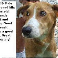 Adopt A Pet :: # 392-10 - ADOPTED! - Zanesville, OH