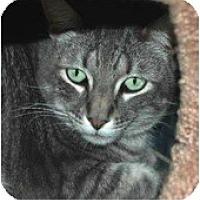 Adopt A Pet :: O'Reilly - El Cajon, CA