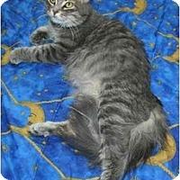 Adopt A Pet :: Melany - Montreal, QC