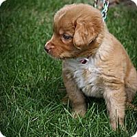 Adopt A Pet :: Mimi - Broomfield, CO