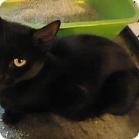Adopt A Pet :: Egypt - Riverside, RI