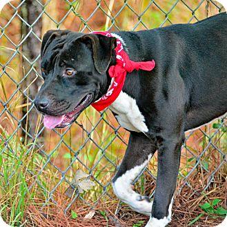Hound (Unknown Type) Mix Dog for adoption in Brooksville, Florida - ZAYN