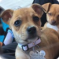 Adopt A Pet :: Laurel - San Diego, CA
