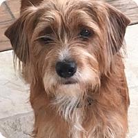 Adopt A Pet :: LOLA - Katy, TX