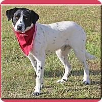 Adopt A Pet :: Birdie - Hillsboro, TX