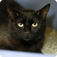Adopt A Pet :: Cassiopeia - Kettering, OH