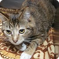 Adopt A Pet :: Zabrina - Chippewa Falls, WI
