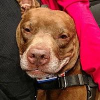 Adopt A Pet :: Walter - Villa Park, IL