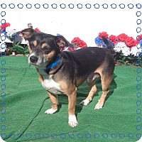 Adopt A Pet :: JAMIESON - Marietta, GA