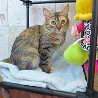Adopt A Pet :: Athena - Chandler, AZ