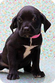 Hound (Unknown Type) Mix Puppy for adoption in Waldorf, Maryland - Sally