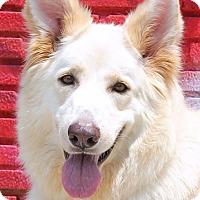 Adopt A Pet :: Paquita Von Prem - Los Angeles, CA