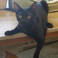 Adopt A Pet :: Sebastian - Larned, KS
