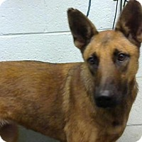 Adopt A Pet :: Amiee - Chipped- ADOPTED - Decatur, GA