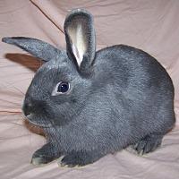Adopt A Pet :: Tipper - Alexandria, VA