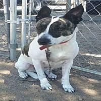 Adopt A Pet :: DAISY - Mesa, AZ