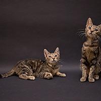 Adopt A Pet :: Anna & Lena - Pasadena, CA