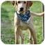 Photo 2 - Labrador Retriever/Golden Retriever Mix Puppy for adoption in Portsmouth, Rhode Island - Catch