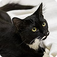Adopt A Pet :: Luigi - Chicago, IL