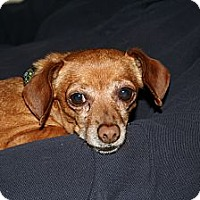 Adopt A Pet :: Charlie - Commerce City, CO
