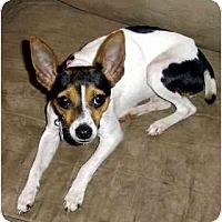Adopt A Pet :: Jolie - Suffolk, VA