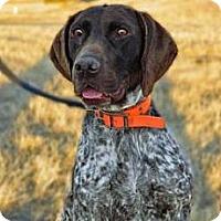 Adopt A Pet :: Fran - Cheyenne, WY