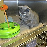 Adopt A Pet :: Ci Ci - Warminster, PA