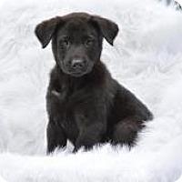 Adopt A Pet :: Fulton - New Boston, NH