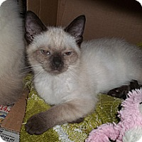 Adopt A Pet :: Tai - Acme, PA