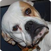 Adopt A Pet :: Journey - Beachwood, OH