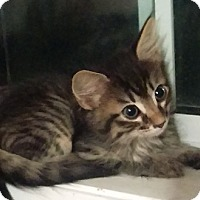 Adopt A Pet :: Marshall - Edmonton, AB
