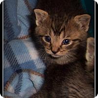 Adopt A Pet :: Kit-Kat - South Plainfield, NJ