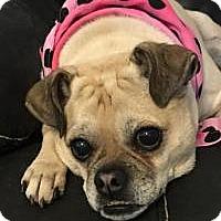 Adopt A Pet :: Trixie - Princeton, KY