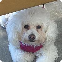Adopt A Pet :: Wanda - Los Angeles, CA