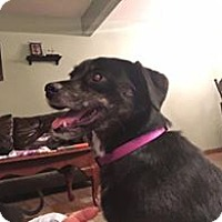 Adopt A Pet :: Sophie - ROME, NY